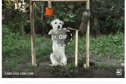 Facebook GIF posztolás